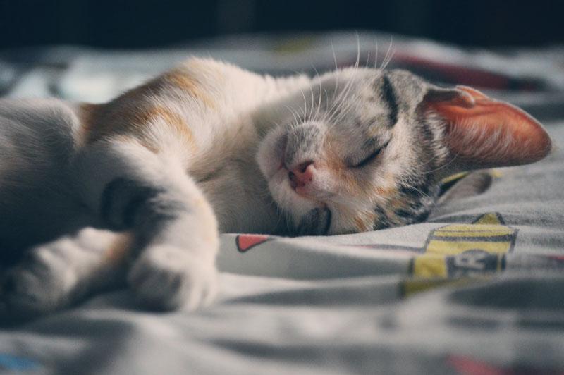 Sleep Prep for Back to School